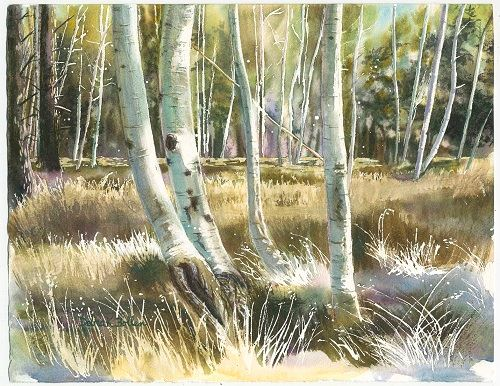 Catch the Light by Debra K. Bollen, Watercolor of White Birch Trees