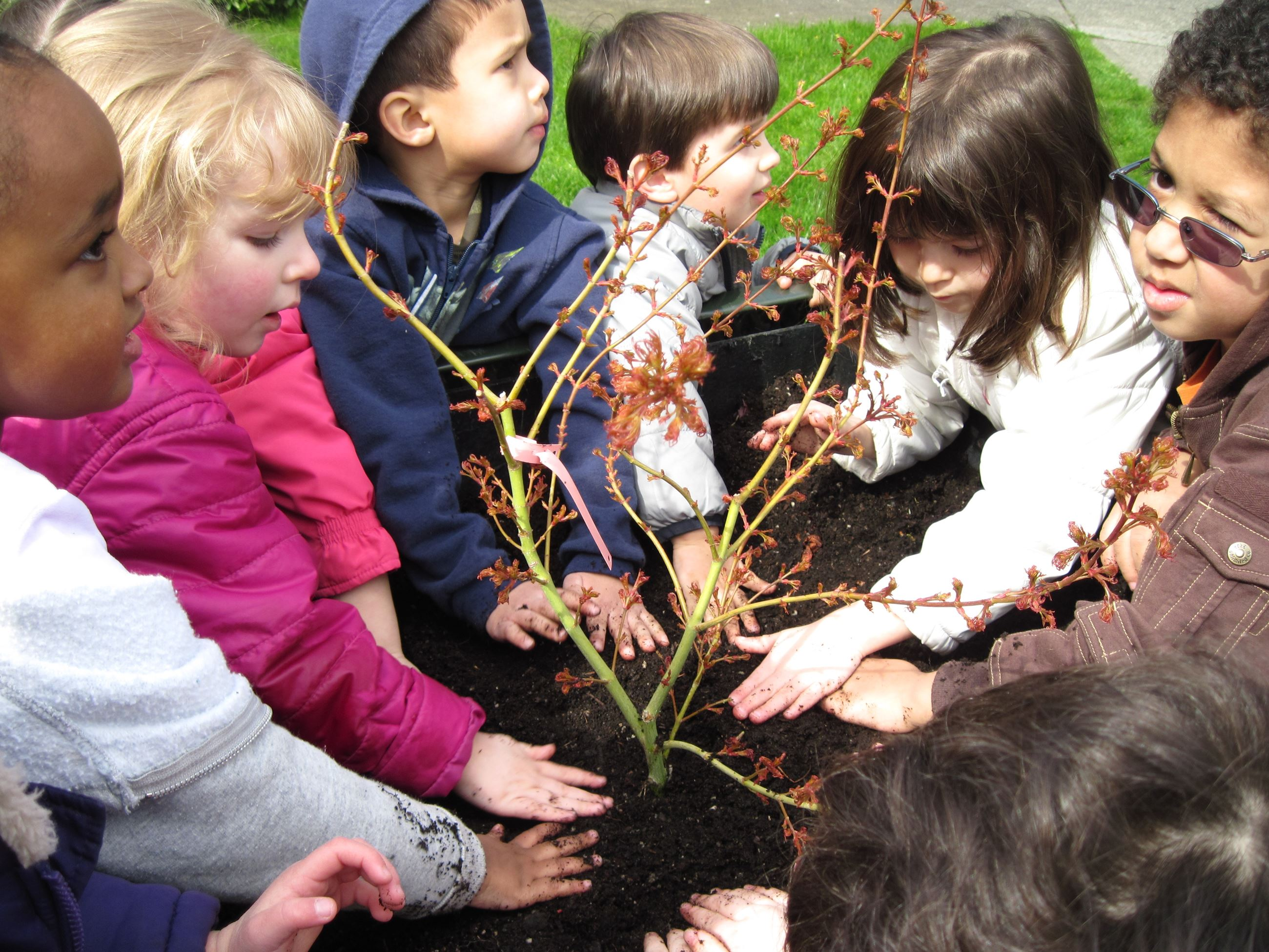 Eight children patting soil around plant for Earth Day