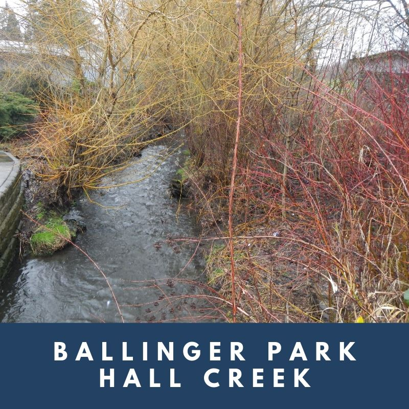 Ballinger Park Hall Creek