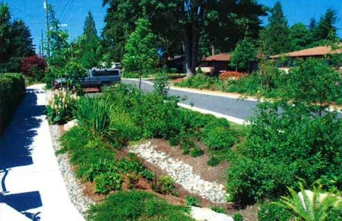 Bio-Retention Area Along a Road