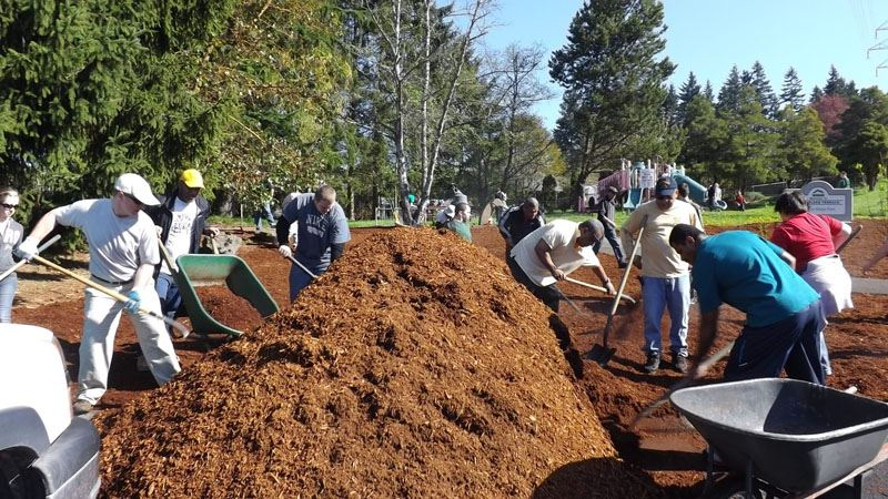 Moving new mulch with rakes, shovels, and wheelbarrows.